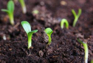 planter i spagnum