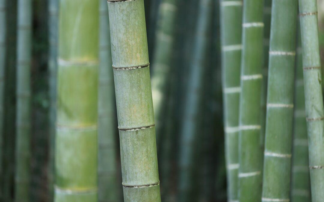 bambusplanter