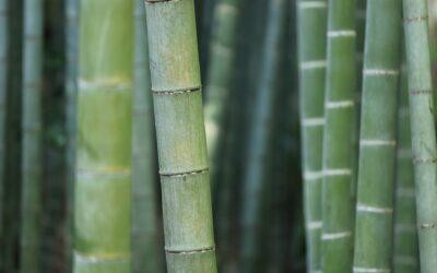 Derfor bør du vælge bambusmøbler