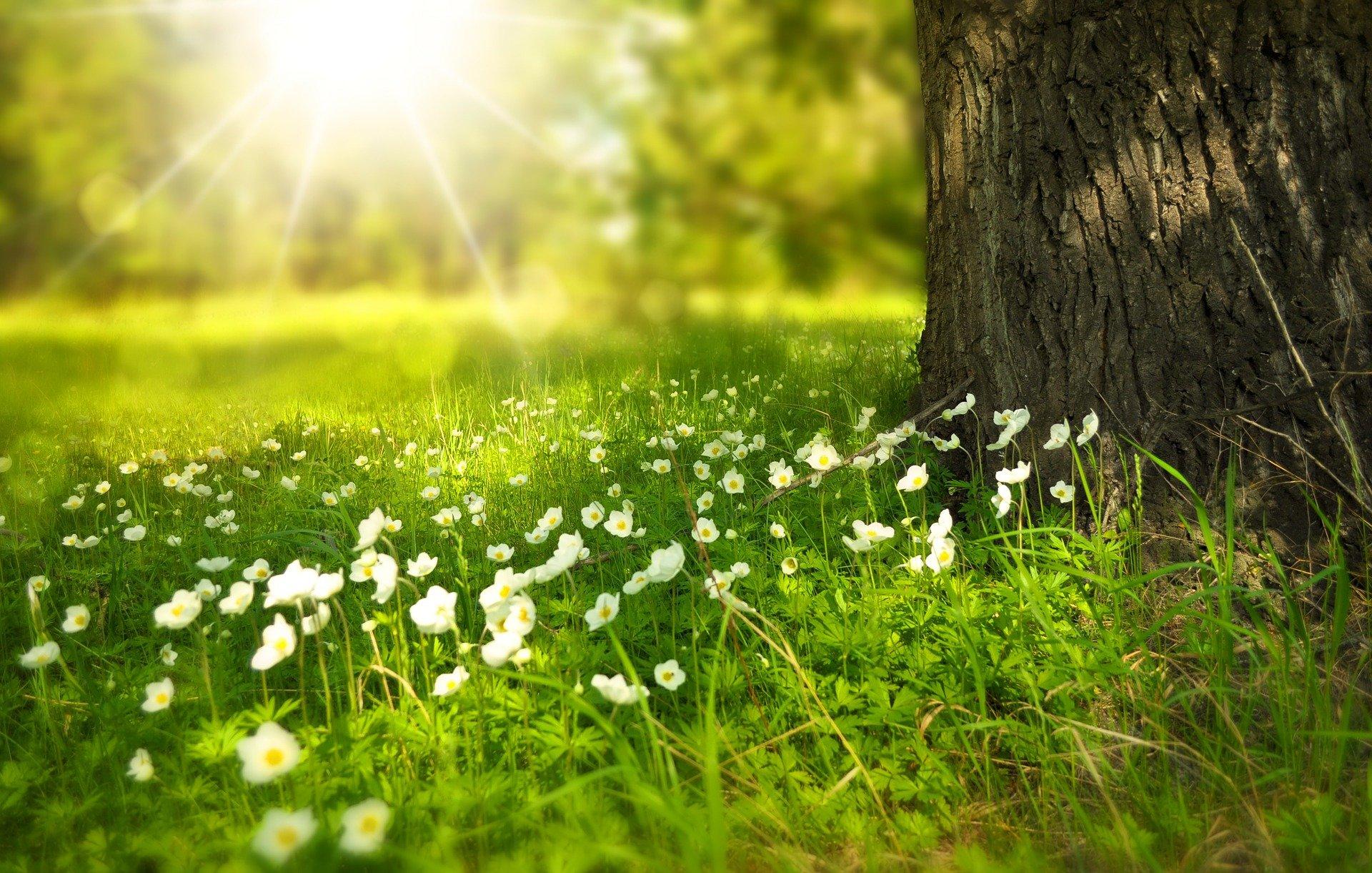 blomster_graes